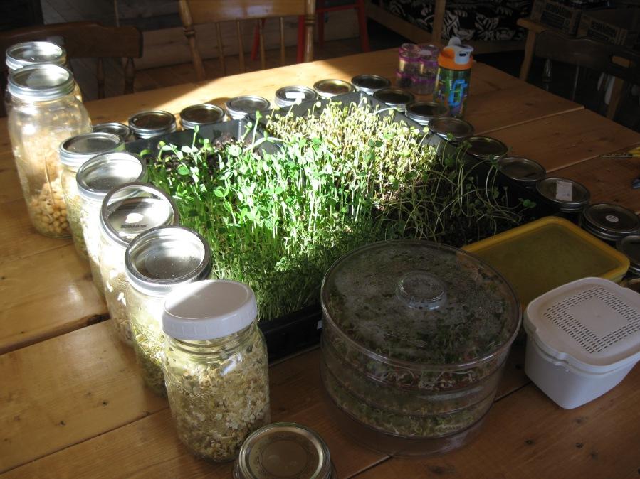 15 variétés de germinations et pousses