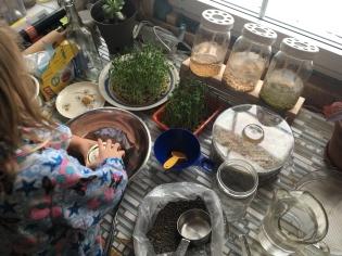 Préparation de l'atelier en famille : on mesure les quantités de graines nécessaires à faire germer et pousser.
