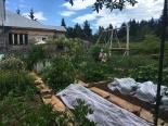 Une autre vue du jardin avec ses jeunes cueilleuses.